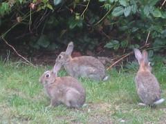 Rabbits 2