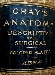 Gray's Anatomy, Descriptive and Surgical