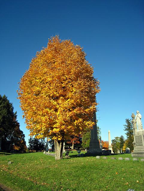 Oakwood Cemetery - Troy, NY - 16
