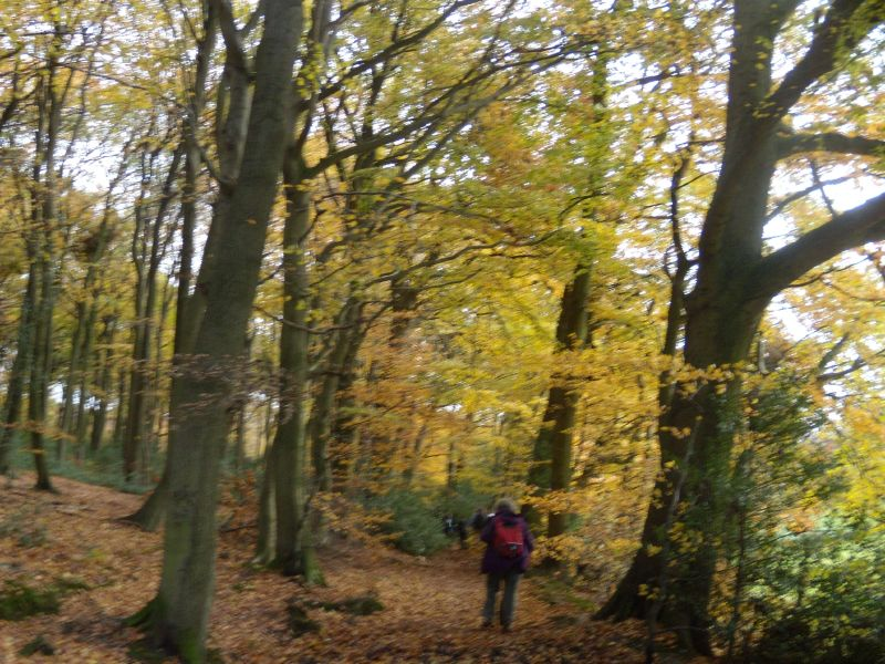 Monkton Wood Princes Risborough to Great Missenden