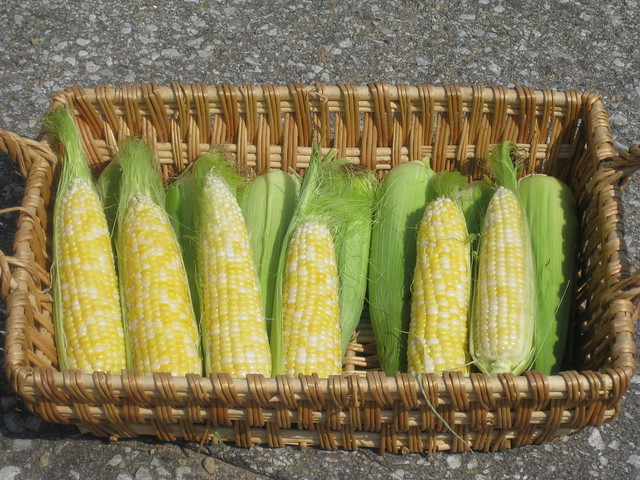 Sweet Corn, a Nebraska treat!