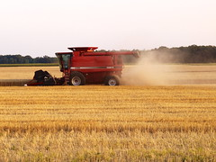 prairie, agriculture, farm, field, plain, plant, harvest, crop, rural area, grassland, harvester,