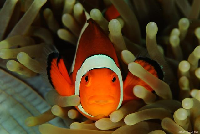 Nemo say....