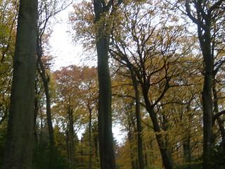 Monkton Wood