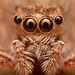 Look Into My Eyes! by J.J. Henry