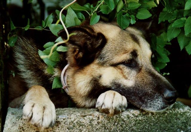 Hungry Hounds Dog Treats Shopfrontpro