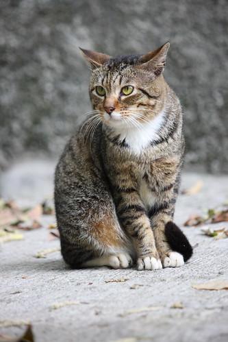 CAT_2008_0054