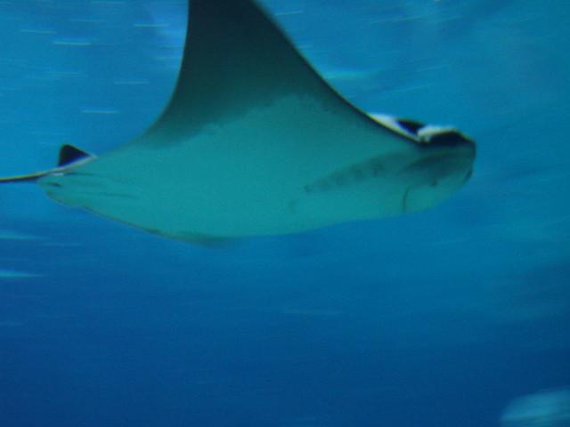 2008 03 16 Camden 031 New Jersey State Aquarium Explore