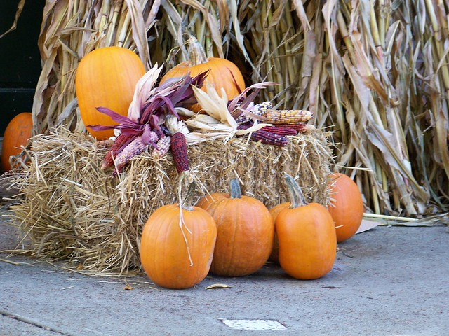 Image Result For Fall Harvest Movies