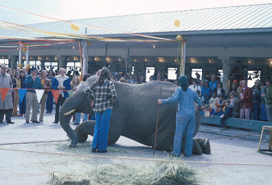 Elephant at Pike Place Market, 1978