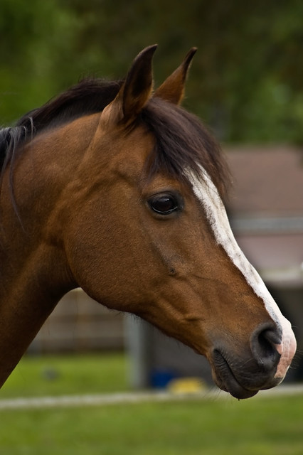 Side View of Beautiful Horse | Flickr - Photo Sharing!
