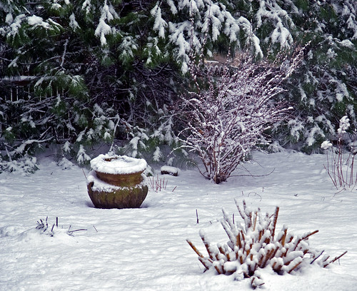 winter garden by Alida's Photos