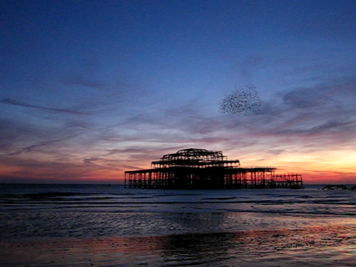 West Pier Starlings, Brighton