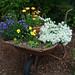 wheelbarrow garden by artistgal