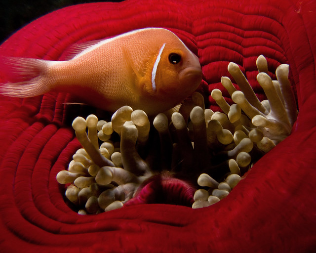 how to play music in clownfish