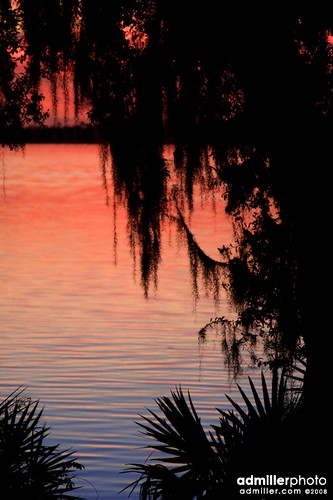 sunset tree water silhouette canon reflections bay potd spanishmoss palmetto 40d