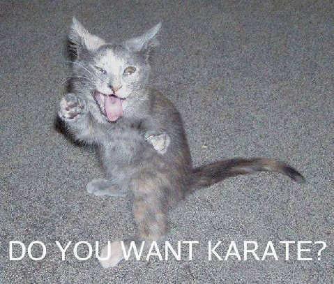 3059100559 48738fb3b8 funny cats a 023