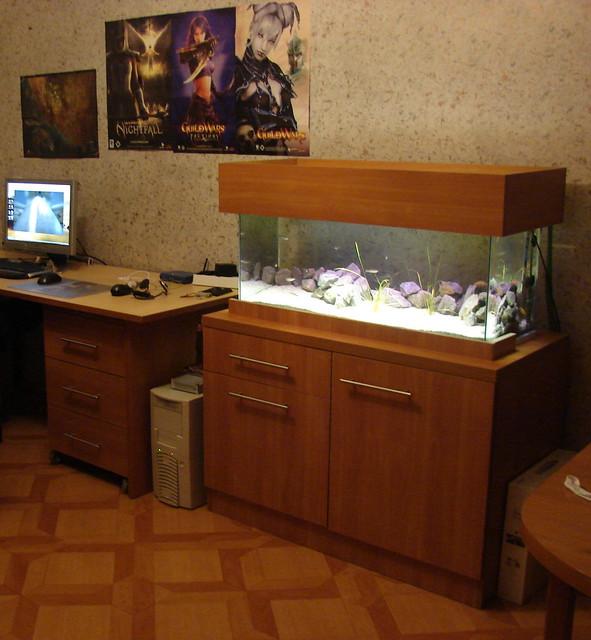 Aquarium 120l tanganyika 120l tank 6 neolamprologus for Aquarium 120l