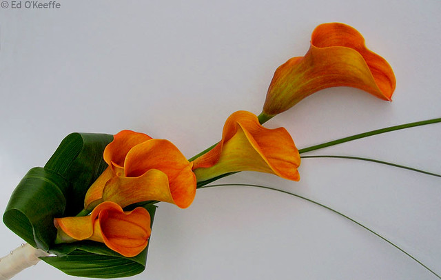 Orange Arum Lily Flowers