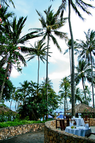 Under the Coconut Trees