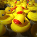 rubber ducks everywhere!