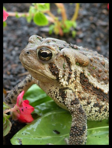 The Toad That Was Mowed