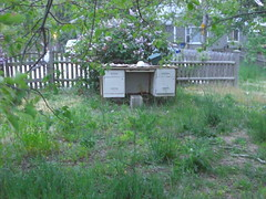 insect(0.0), membrane-winged insect(0.0), apiary(0.0), bee(0.0), beehive(0.0), land lot(1.0), yard(1.0),