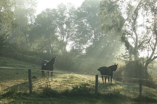 lighting horse sunrise wv pasture westvirginia herd loh