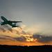 Flight at Dusk by PictureKat