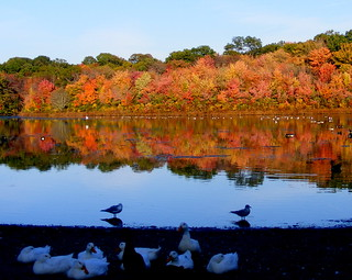Reflections of Autumn on Long Island #4