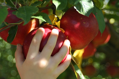 Alber Apples