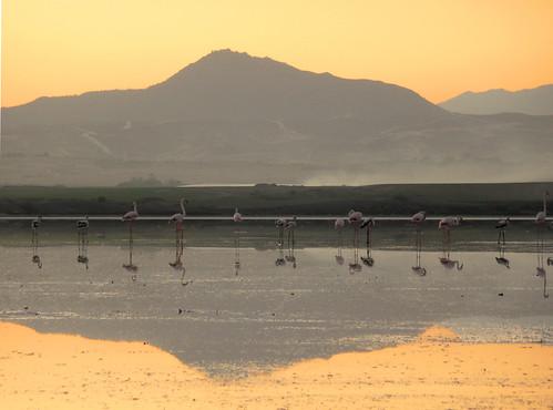 sunset orange mountain reflection water birds flamingo cyprus saltlake larnaca larnaka stavrovouni aplusphoto georgestavrinos ssjgeorge γιώργοσσταυρινόσ