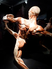 20100429 bodyworlds calgary - 09