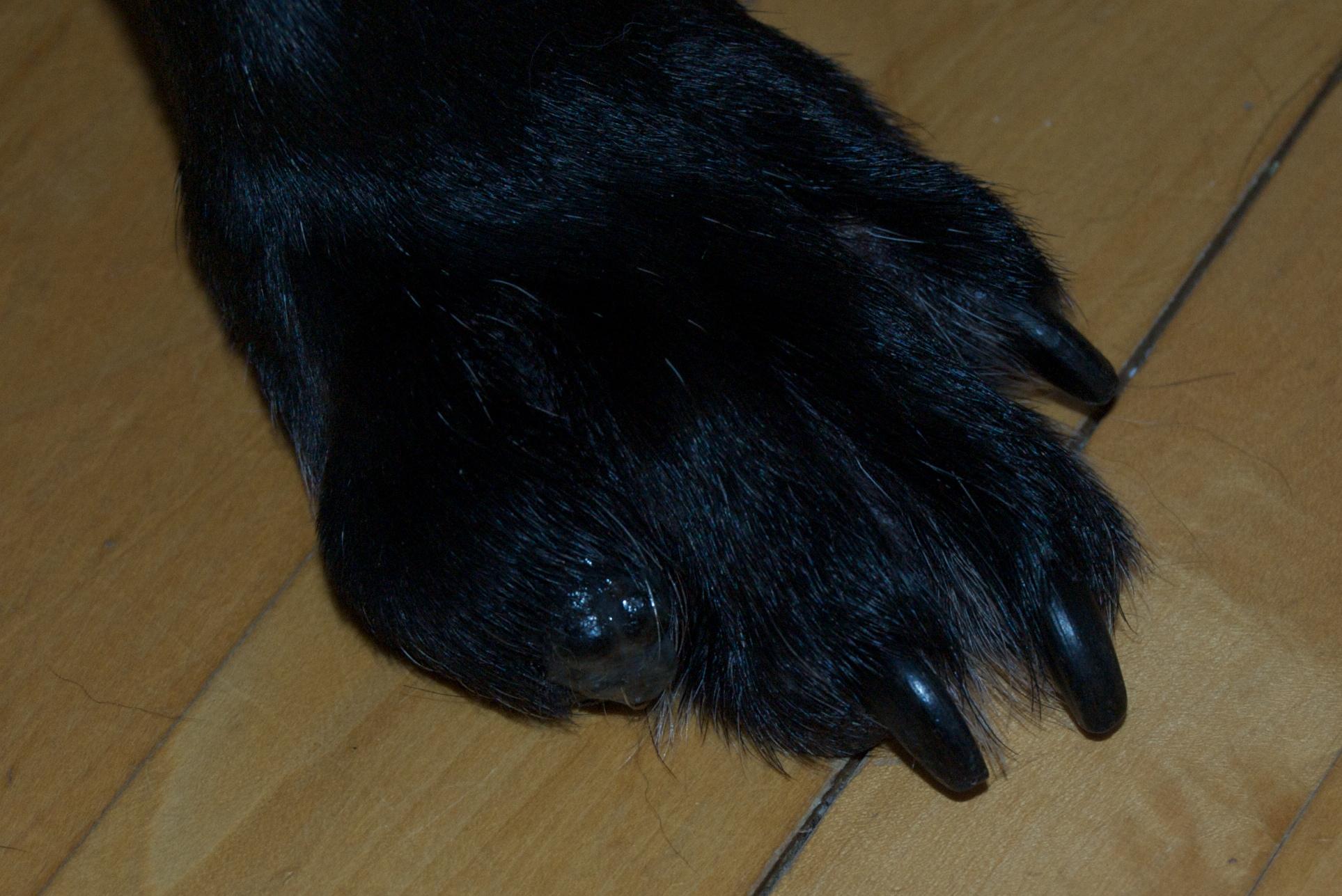 Image Result For Cancer Symptoms Dogs
