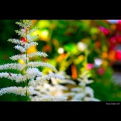 Noël au jardin...!!!