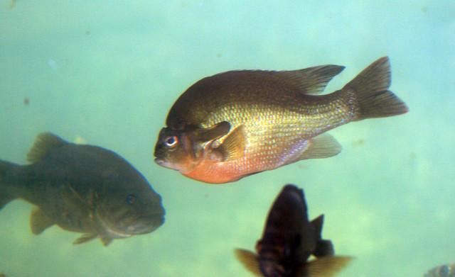 2008 07 25 athens tx freshwater fish hatchery 2916 for Fish hatchery texas