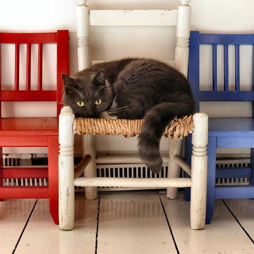 Red Cat Blue