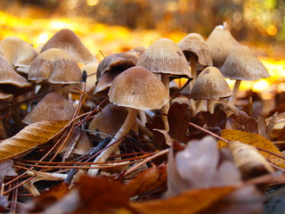 Fall Mushrooms