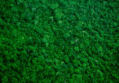 leaf, tree, green, forest, vegetation, groundcover,