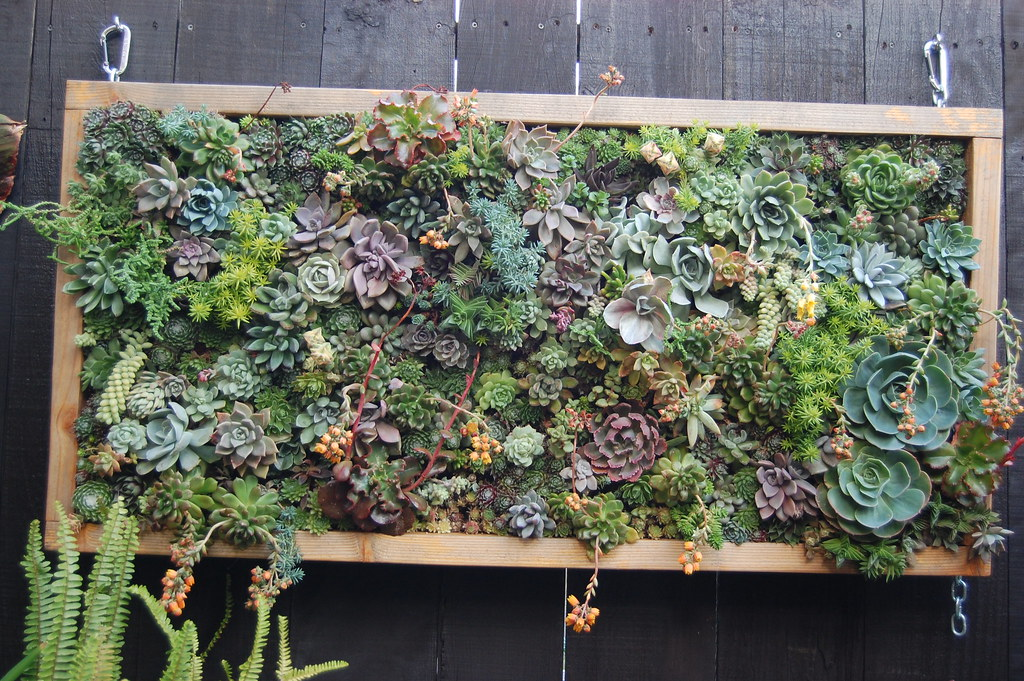Big, badass succulent panel vertical garden patio accents tips ideas how to advice outdoor decoration decor