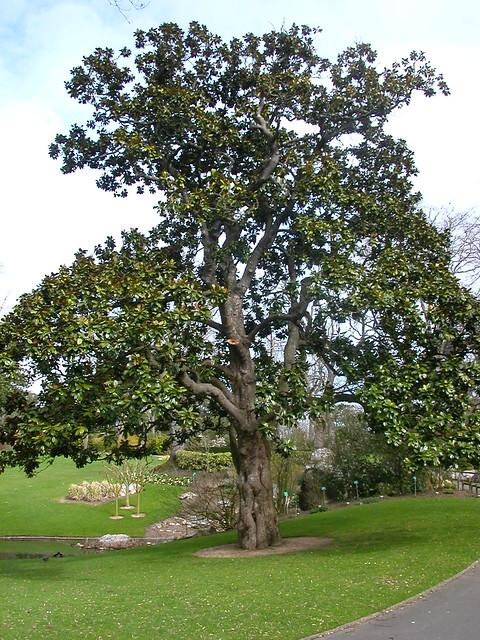 Magnolia for ever jardin des plantes de nantes le for Jardin des plantes nantes