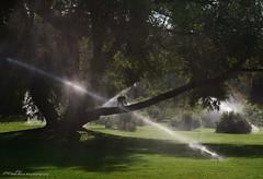 Jaden at Finch Arboretum