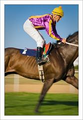 western riding(0.0), eventing(0.0), horse trainer(0.0), animal sports(1.0), horse racing(1.0), equestrianism(1.0), english riding(1.0), racing(1.0), stallion(1.0), equestrian sport(1.0), rein(1.0), jockey(1.0),