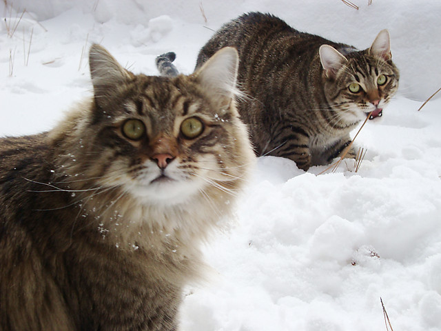 Bubba and Ronaldo in the snow
