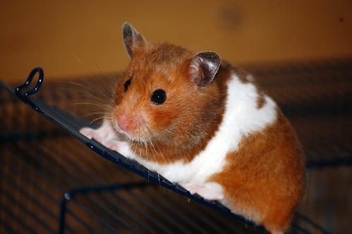 Acessórios para hamsters - Petlove - O Maior Petshop Online do Brasil