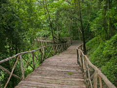 suspension bridge(0.0), rope bridge(0.0), nature reserve(1.0), woodland(1.0), trail(1.0), rainforest(1.0), old-growth forest(1.0), forest(1.0), natural environment(1.0), wilderness(1.0), state park(1.0), jungle(1.0), walkway(1.0), bridge(1.0),