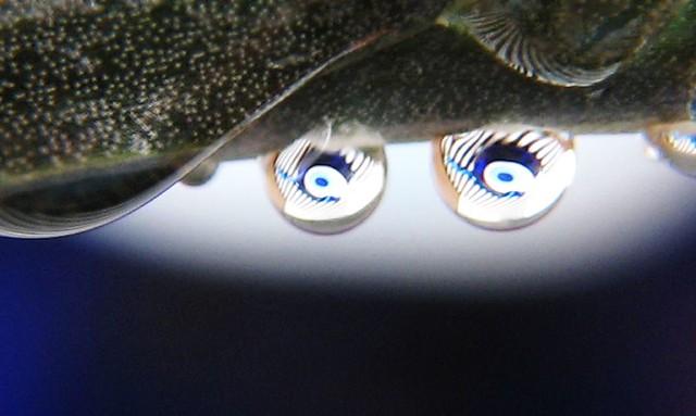| صور رائعه على مقربه من قطرات المياه مناظر رائعه | 2744322886_a5c02247d4_z.jpg?zz=1