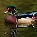 Wood Duck - Photo (c) ian wetton, some rights reserved (CC BY-NC-ND)