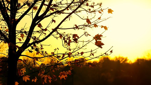 autumn sunset tree fall leaves day140 gmt blueribbonwinner project365 mywinners goldstaraward