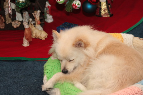 Dreaming of a Doggie Christmas